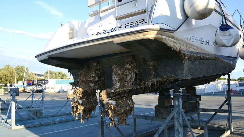 Best antifouling alternatives